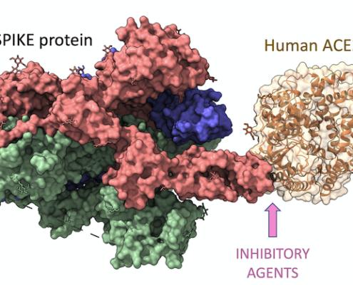 SARS-COV2 spike protein